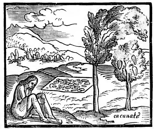 cachuate tree benzoni 177.jpg